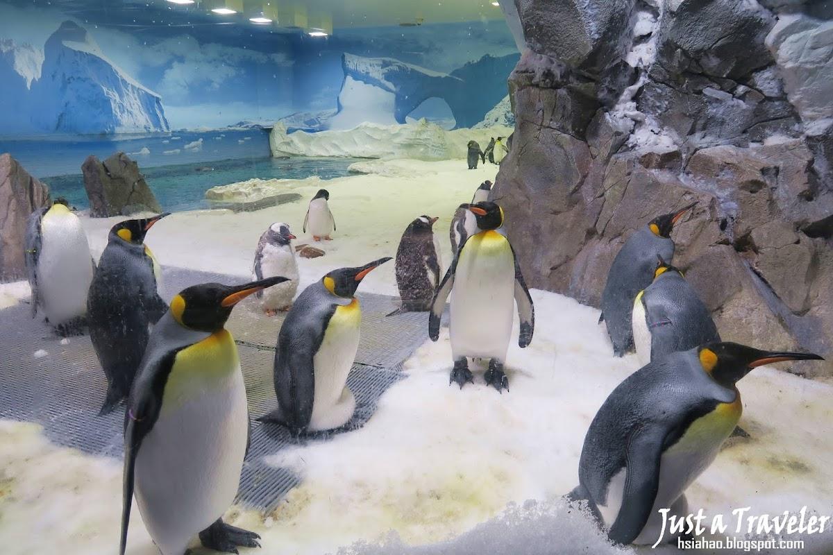 黃金海岸-景點-推薦-海洋世界-Sea-World-企鵝-黃金海岸套票-旅遊-自由行-澳洲-Gold-Coast-theme-park-Australia