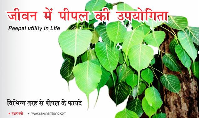 Peepal utility in life hindi, peepal ka mahatva hindi, peepal ke jankari hindi, peepal kya hai hindi, peepal se fayde hindi, peepal ki pooja hindi, pvitr pooja peepal hindi, peepal ki kirpa hindi, peepal se sukh-shanti hindi, aaj peepal ka mahatva hindi, peepal ki upyogita hindi, ramban peepal hindi, peepal ki pooja kaise karni chahiye hindi, aaj se hi karein peepal ki pooja hindi, shanivar ko peepal ki pooja hindi, peepal ke barein mein hindi, peepal ka gyan hindi, peepal ki shakti hindi, peepal kya deta hai hindi, जीवन में पीपल की उपयोगिता hindi, Peepal Utility in Life in hindi, Peepal ka mahatva hindi, Peepal ke barein mein hindi, Peepal kya hai hindi, Peepal ki pahchan khan se hai hindi, pipal ki upyogita in hindi, pipal ki upyogita hindi, pipal ke ped ke upay in hindi, peepal leaves in hindi, peepal tree oxygen in hindi, peepal tree information in hindi, peepal ke fayde in hindi, pipal ki jata ke fayde in hindi, pipal ke fayde  peepal ki upyogita in hindi, peepal ki upyogita hindi, peepal ke ped ke upay in hindi, peepal leaves in hindi, peepal tree oxygen in hindi, peepal tree information in hindi, peepal ke fayde in hindi, peepal ki jata ke fayde in hindi, peepal ki pooja in hind, peepal pooja hindi, peepal ki pooja kaise karein hindi, aur nuksan in hindi, पीपल का पुरातन से आज तक इस्तेमाल किया जा रहा है hindi, चाहे वह रोगों को ठीक करने में हो या फिर पूजा-पाठ लिए हो hindi, आज भी पीपल के पेड़ की पूजा का अपना विशेष महत्व है hindi, और इसके साथ-साथ पीपल के पत्ते से लेकर छाल और फल हर चीज कई बीमारियों को दूर करने के लिए मददगार होती है hindi, यह एक ऐसा पेड़ है जो की 24 घंटे हमें ऑक्सिजन देता है hindi, पीपल का पेड़ पूज्जनीय और धार्मिक महत्व रखता है hindi, पीपल औषधीय वृक्ष होता है hindi, इसके पत्ते, फल, लकड़ी और अन्य भागों में कुछ न कुछ औषधीय गुण होते है hindi, पीपल से त्वचा रोग, अस्थमा, गुर्दे की बीमारी, कब्ज, नपुंसकता आदि रोगों के लिए लाभकारी होता है hindi, पीपल के पत्तों में ग्लूकोज, फेनोलिक, मेनोस आदि पोषक तत्व होते है hindi, जबकि इसकी छाल में कई विटामिन होते है hin