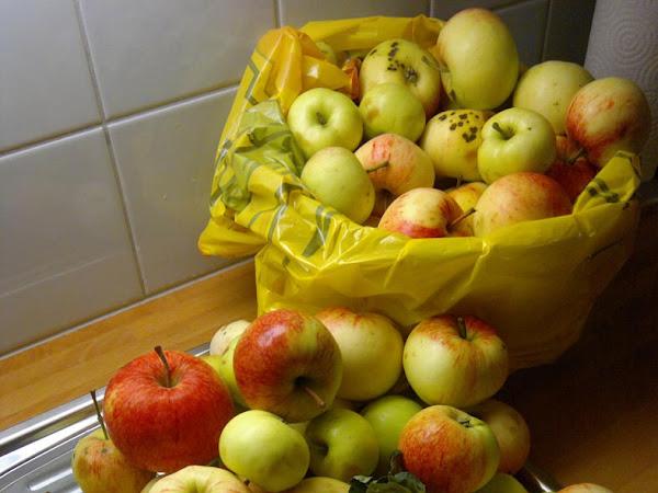 Oodi omenalle