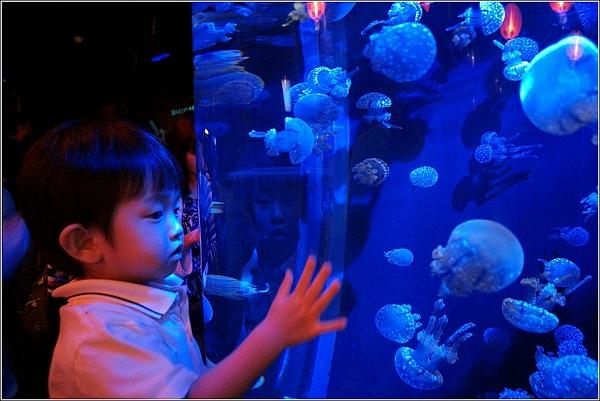 Ngắm nhìn sứa biển ở cự ly cực gần tại S.E.A Aquarium