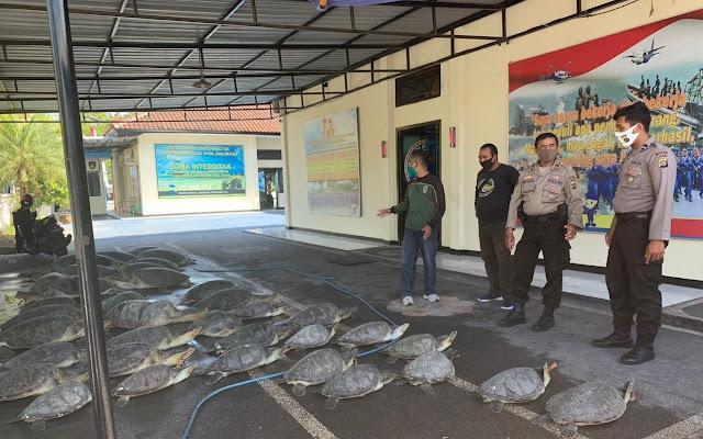 Polisi Tangkap 7 Orang Penyelundup Penyu Hijau