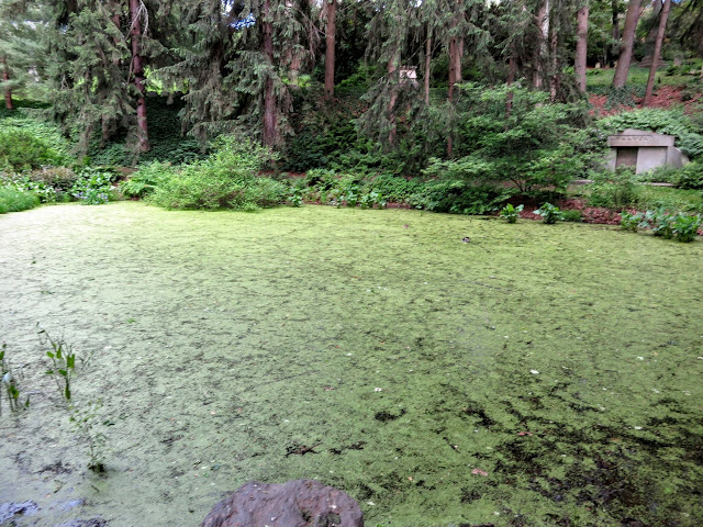 The bog at Mount Auburn Cemetery in Cambridge, Massachusetts
