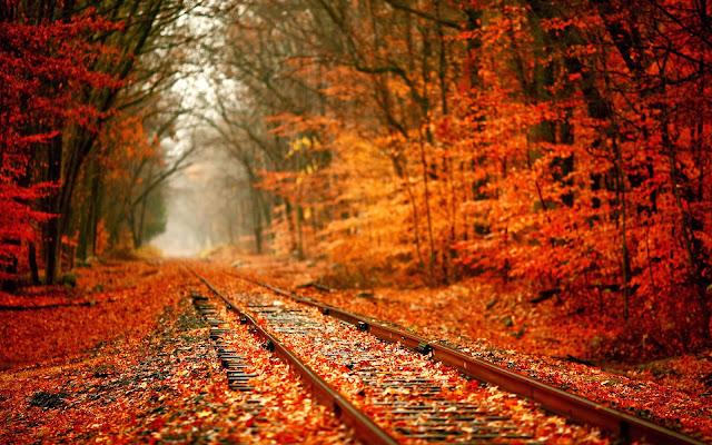 Foto met een treinspoor in het bos in de herfst