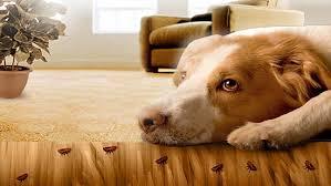 Esta enfermedad es muy dolorosa para tu mascota. Por lo tanto, se deben tomar medidas para aliviar el dolor, como la medicación, y brindarles un lugar cálido y confortable para descansar, especialmente para perros mayores