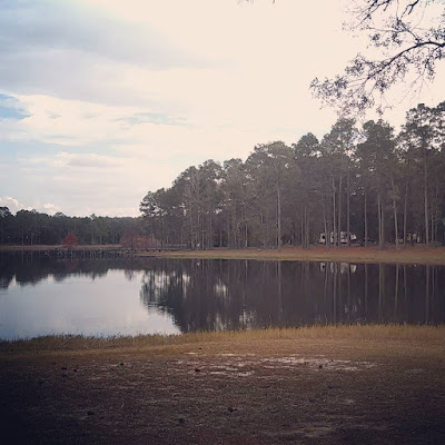Campsite among longleaf pines, seen across the Open Pond