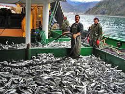Balıkçılık Teknolojisi nedir