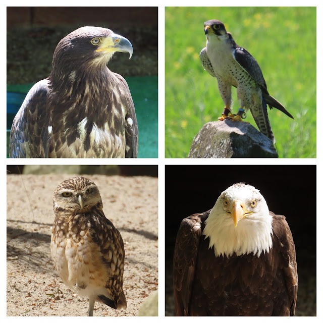 The Hawk Conservancy Trust near Andover is a great day out for all the family and Feathers Restaurant is worth a visit too