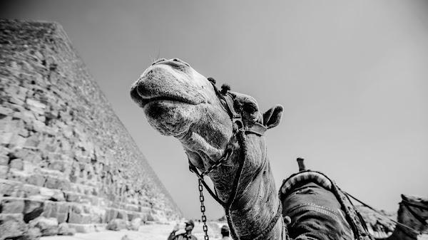 صورة للأهرامات في ام الدنيا مصر