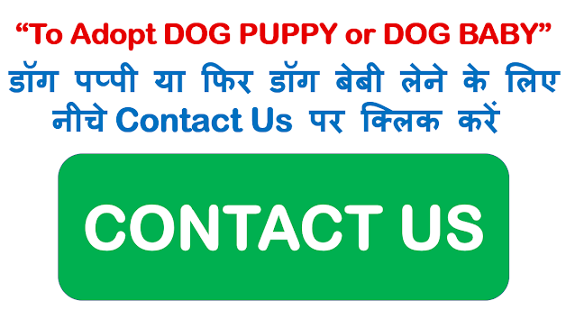 doberman puppy price Dehradun, doberman dog price Dehradun,doberman baby price Dehradun