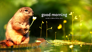 good morning wishes squirrel flower greetings