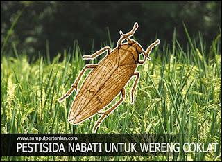 PESTISIDA NABATI untuk pencegahan dan pengendalian hama Wereng coklat (Nilaparvata lugens)