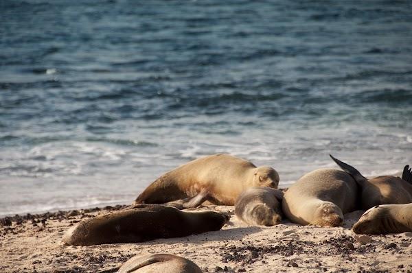 ¿Cuál es la calidad del agua en las Islas Galápagos?