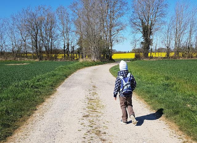 Küsten-Spaziergänge rund um Kiel, Teil 3: Raps, Steine und Meer bei Hohenfelde. Die Rapsblüte in Kiel und Umgebung bei einem Spaziergang erleben!