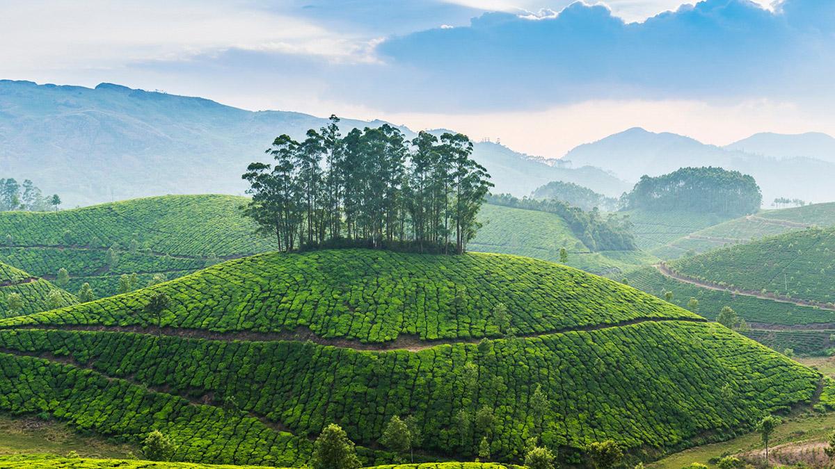 Муннар в Индии, чайные плантации штата Керала