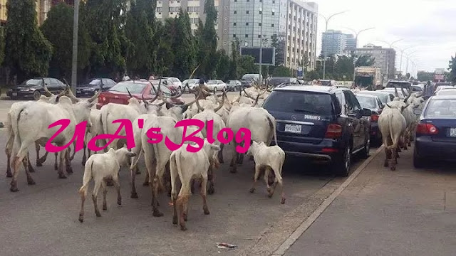 Stop Moving With Cattle In Igboland – Ohanaeze Youth Gives Ultimatum To Herdsmen, Miyetti Allah