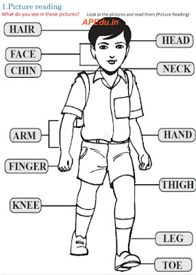 VOCABULARY BUILDER BOOK (Body Parts)