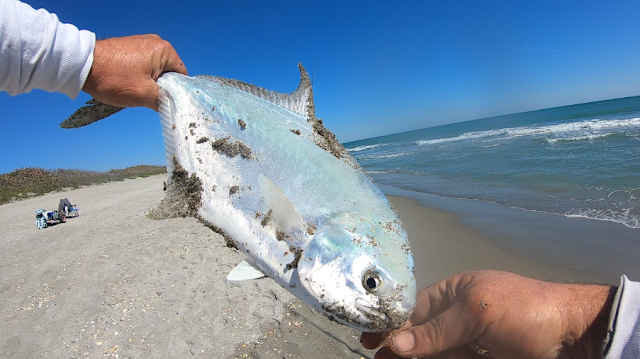 Fish Report, Fishing Report, Florida, East Coast, Fishing, Anglers, Beach Closures, God Bless, Surf Fishing, Florida Surf Fishing,