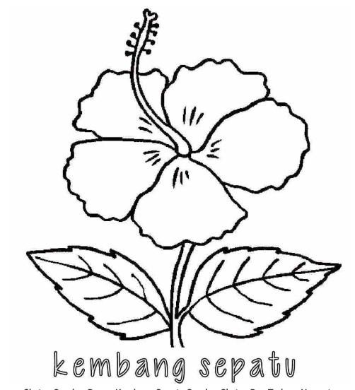 Sketsa Bunga Sederhana Terlengkap Mudah Di Gambar