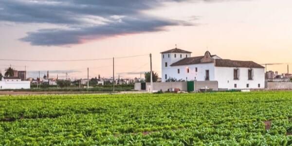 campo de verduras ecológicas ecoama