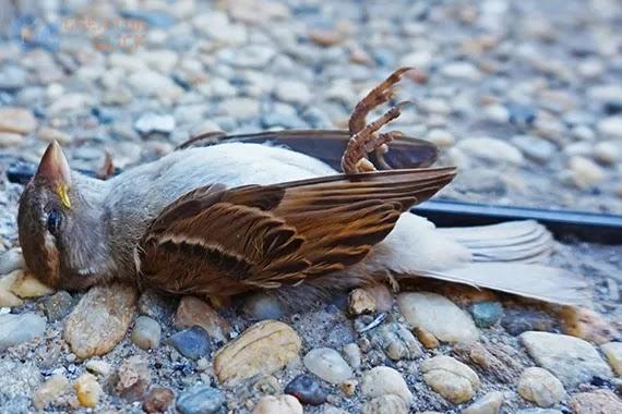 Birds Died During 5G Test