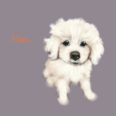 Paul the Pyrenees mountain puppy