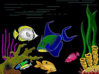 Bahama Reef Life