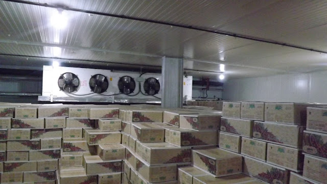 15 Tips About Cold Storage From Industry Experts
