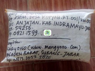 Benih Ketan Pesanan   AMY / DOWO Indramayu, Jabar.  (Benih Sesudah di Packing)
