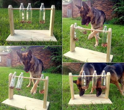 A grid of four pictures showing a timber construction that has three plastic bottles on a thin rod. In three of the pictures a brown and black dog is also pictured.
