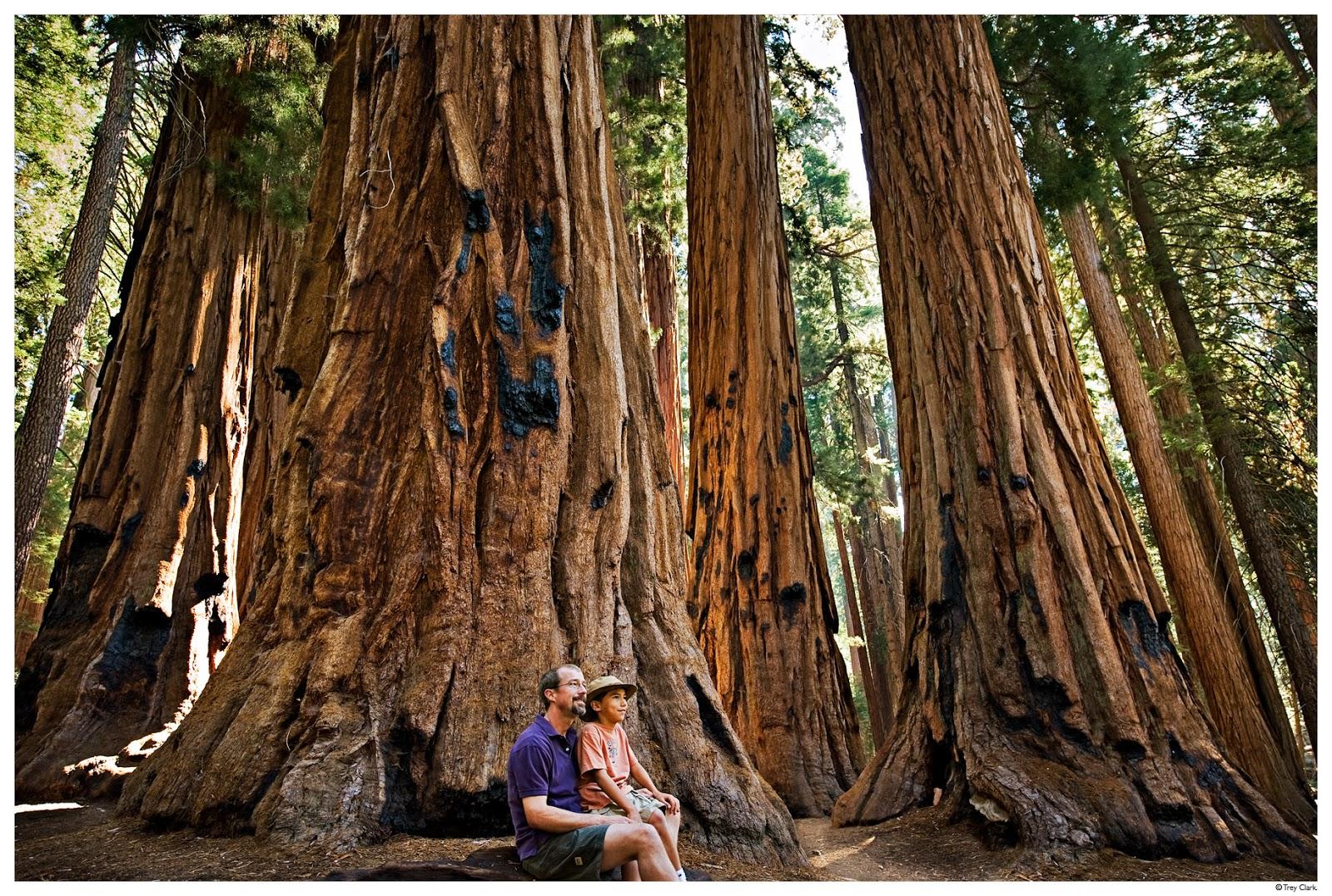 b095dc4c146f 60 метрээс өндөр мод тааралдах нь элбэг зүйл.