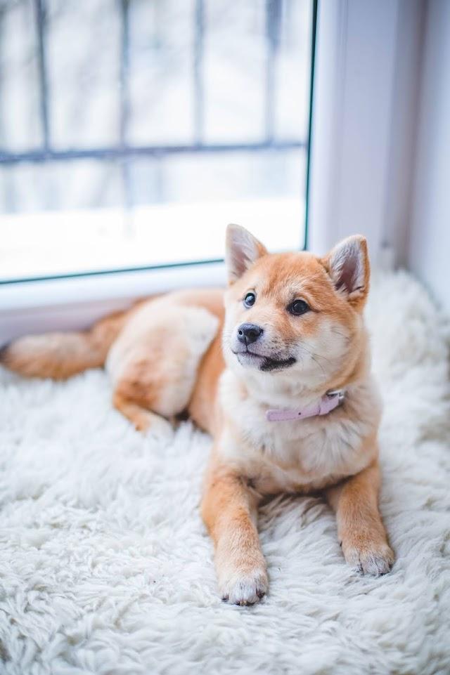 Status Anak yang Berwujud Manusia dari Hubungan Anjing dengan Manusia