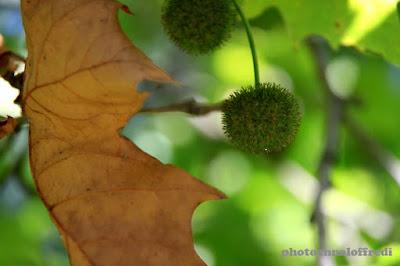 images of autumn photo
