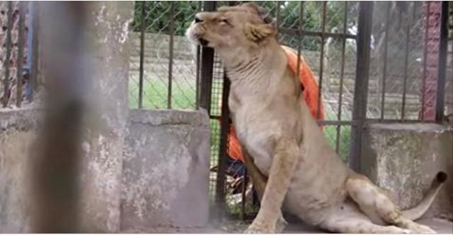 Их бросили умирать голодной смертью в зоопарке…