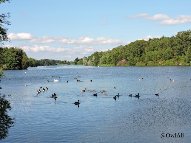A view of the lake at Clumber Park