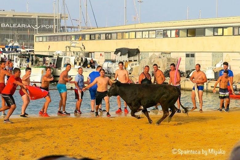 a la mar, Denia スペインの牛追い祭りで牛と牛を海に誘う人々