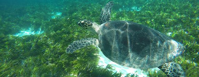 ICS/Craig Nisbet Las islas Seychelles en África se han comprometido para proteger a su biodiversidad marina