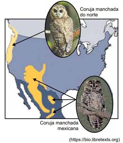 SANTA CASA 2021: Na América do Norte existem duas subespécies de corujas manchadas, a coruja manchada do norte (Strix occidentalis caurina) e a coruja manchada mexicana (Strix occidentalis lucida), que vivem em áreas geográficas diferentes. A imagem ilustra os locais onde essas duas subespécies são encontradas.