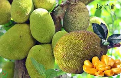 jack fruit,কাঁঠাল