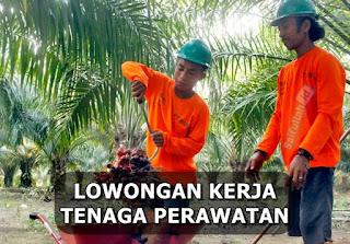 Lowongan Kerja Tenaga Borongan Perawatan PT. Kalimantan Agro Nusantara Kaltim