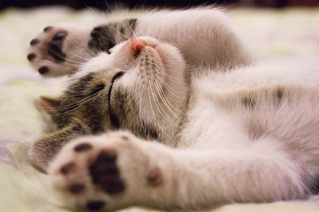 7 Cara Merawat Anak Kucing Yang Baru Lahir Tanpa Induk