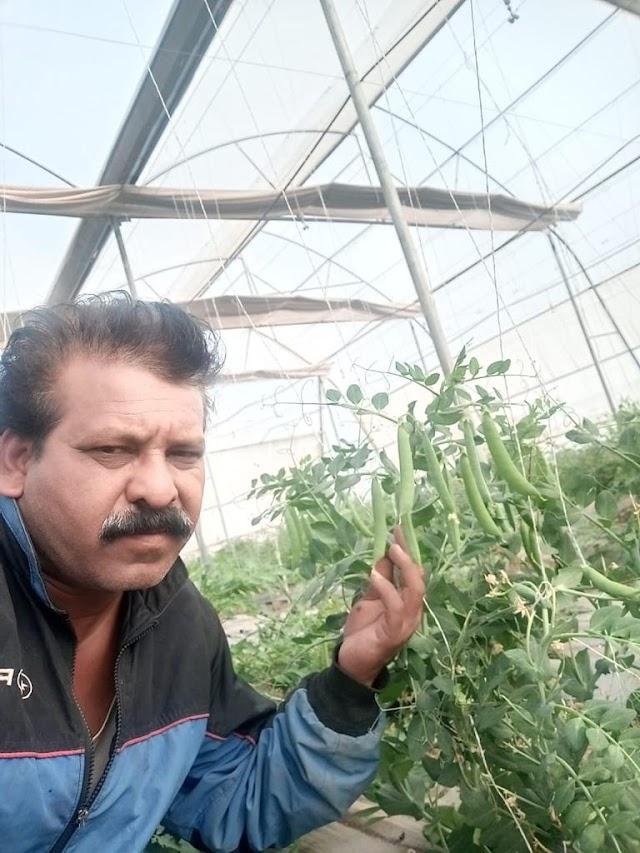 शहर के किसान ईश्वरसिंह ढाई बीघा जमीन पर कर रहे जैविक खेती | Shahar ke kisan ishwar singh dhai bigha zameen pr kr rhe jevik kheti