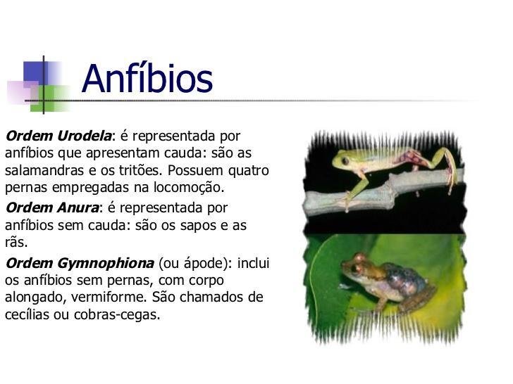 filo cordados anfíbios biologia a ciência da vida