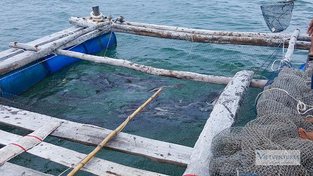Bè nuôi cá Mú, Cá Bóp - Đảo Bà Lụa, Hà Tiên