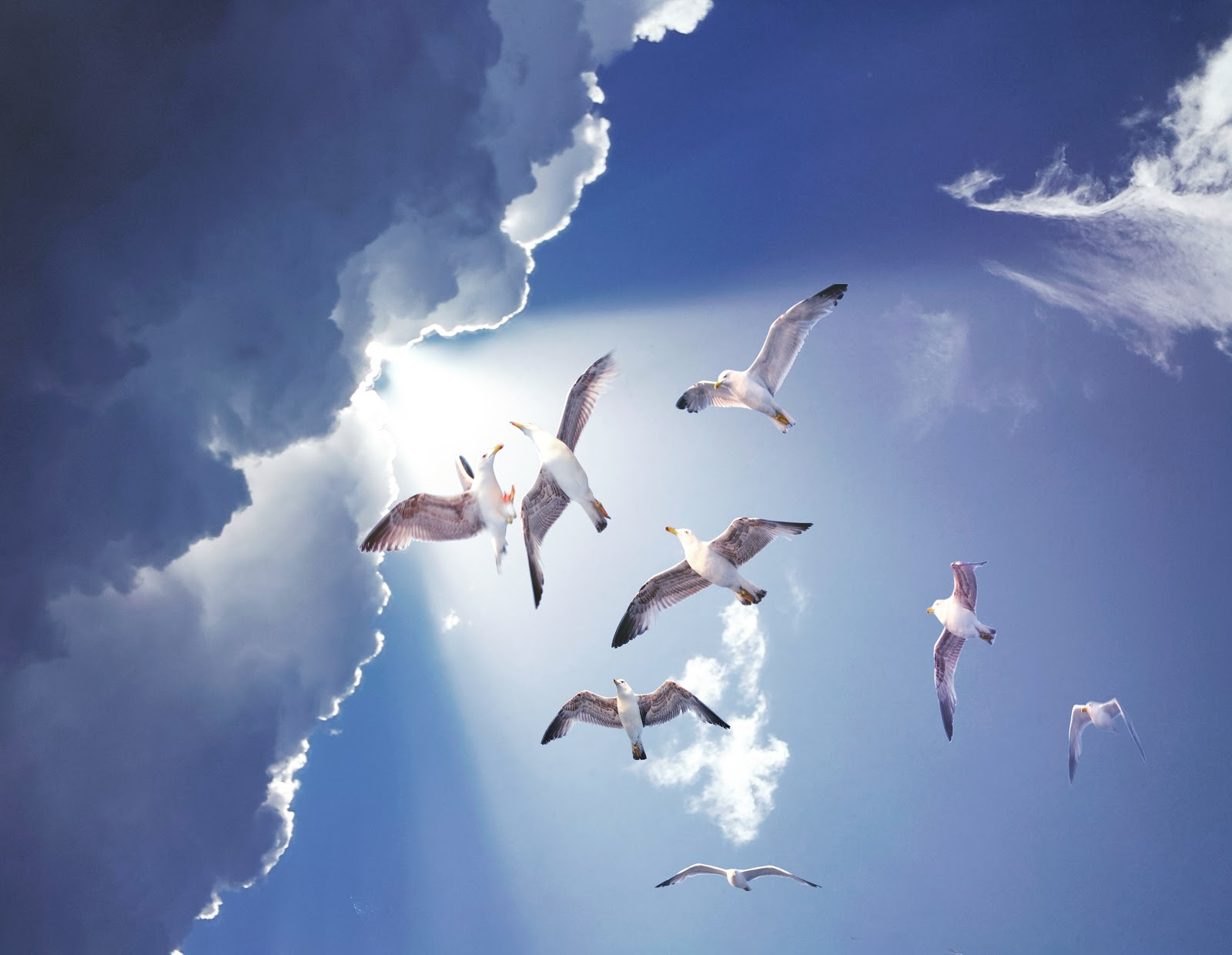 white-birds-flying-pictures