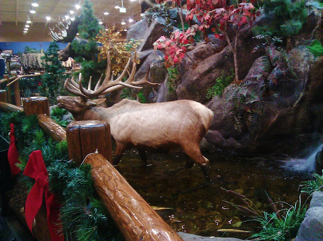 The animals at Cabela's