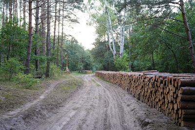 Ścinka drzew na terenie parku
