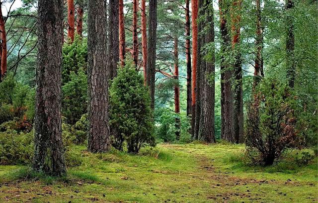 Hari Hutan Sedunia