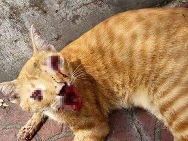 Gigi dicabut, mata kucing dikorek