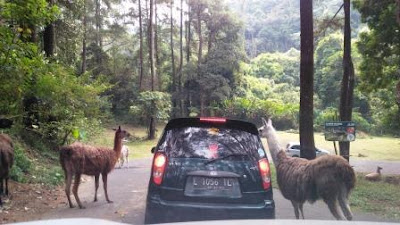 Harga-tiket-taman-safari-prigen