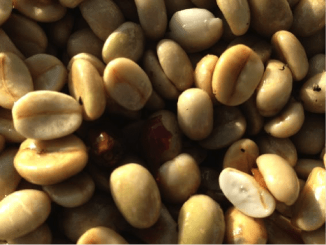Pulped natural process | Understanding Pulped Natural Coffee